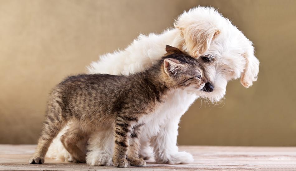 Animali: no all'aliquota IVA del 22% si servizi e beni essenziali